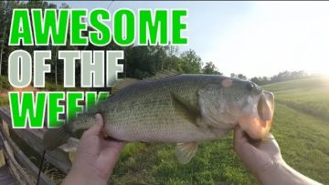 Awesome of the Week: Fishing huge fish! [September 2017]