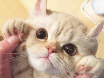 Baby Cats ? Funny and Cute Baby Cat Videos Compilation (2018) Gatitos Bebes Video Recopilacion