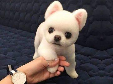 Cute Is Not Enough ? Funny Cats and Dogs Videos Compilation (2018) Perros y Gatos Recopilación