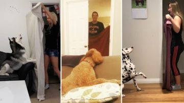 Dogs React To Magic Trick With Blanket ? Perros Reaccionan  Truco De Magia Con Manta