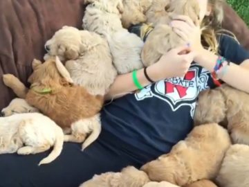 Girl Is Covered In a Pile Of Puppies