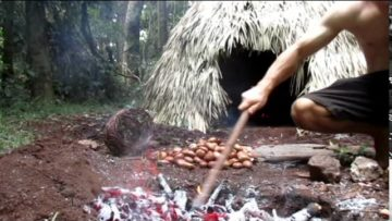 Primitive Technology: Making poisonous Black bean safe to eat (Moreton Bay Chestnut)